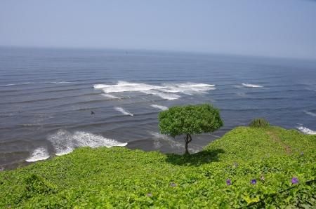 Lima, un spot de surf en plein essor